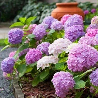 春季潮湿家里有异味?聪明媳妇放一盆栽就搞定,还能净化空气!