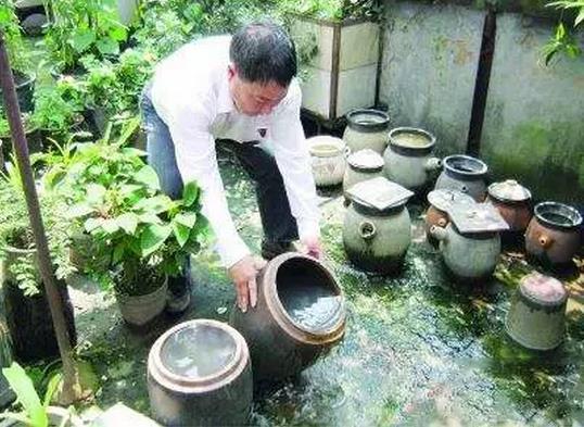 梅雨季节,白蚁肆虐