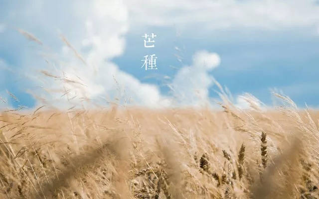 芒种时节|梅雨季将来临,小心湿气找上你