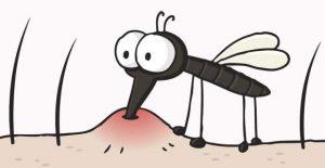 重庆高温潮湿蚊子多 驱蚊必知!