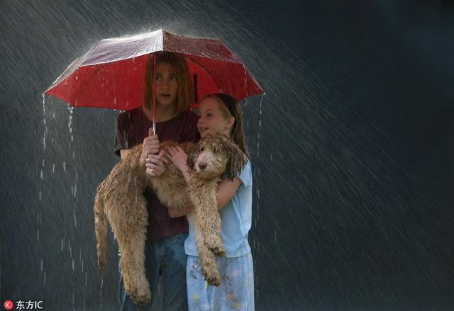 梅雨季動物取景一刻