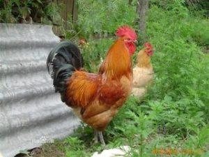 养鸡潮湿怎么办?除湿机选对是关键!