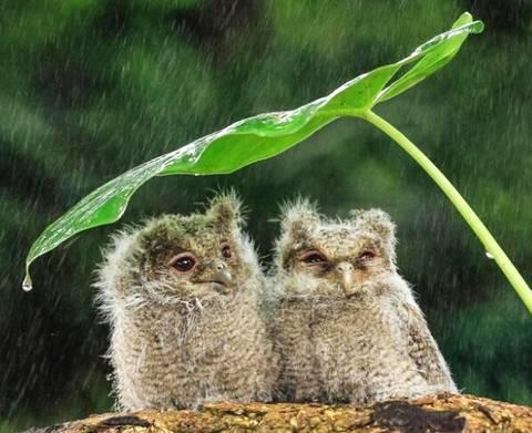 当白癜风遇到梅雨季,白白们应该做什么呢?