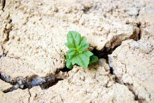 干旱期间如何保持室内栽培的产量?(一)