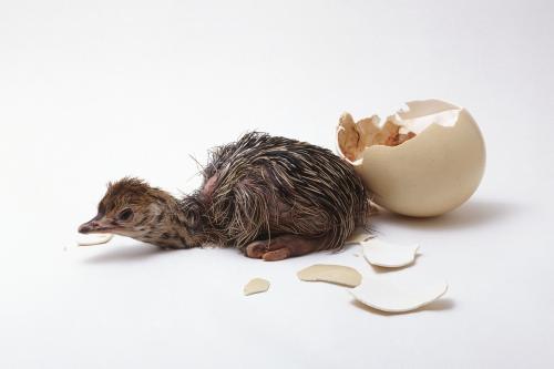 除湿机在鸵鸟孵化中的重要性