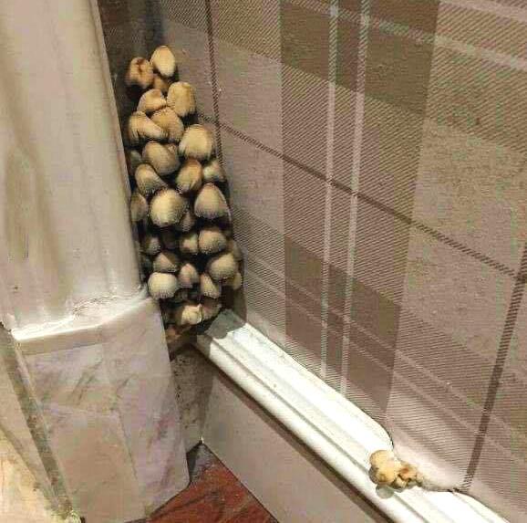 家里长蘑菇了,我想……不,你不想!