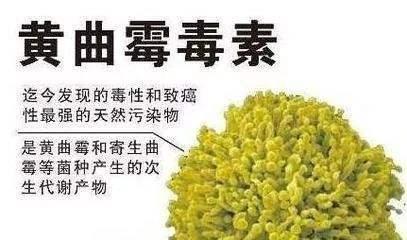梅雨季警惕黄曲霉素!都说发霉的东西不能吃,但老人劝不住怎么办