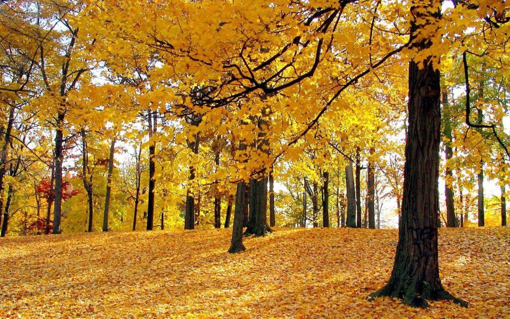 秋天你可能需要新风除湿机